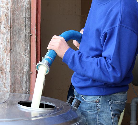 Freischmilch für die Käseproduktion